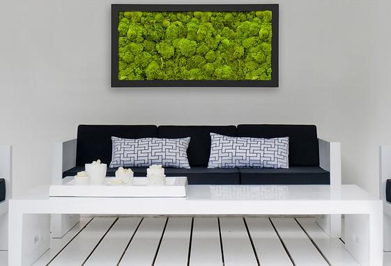 groene bolmoswand in lijst