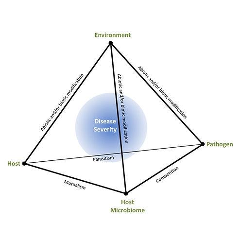 DiseasePyramid.jpg