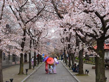 Hunting Sakura di Jepang? Ini Tempat Populer di Tokyo Untuk Menikmatinya