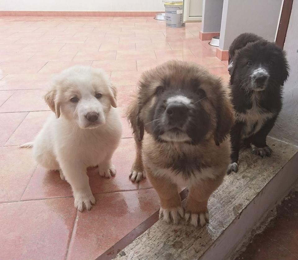 7 cuccioli