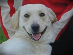 LUPINO, affettuosissimo cagnolone