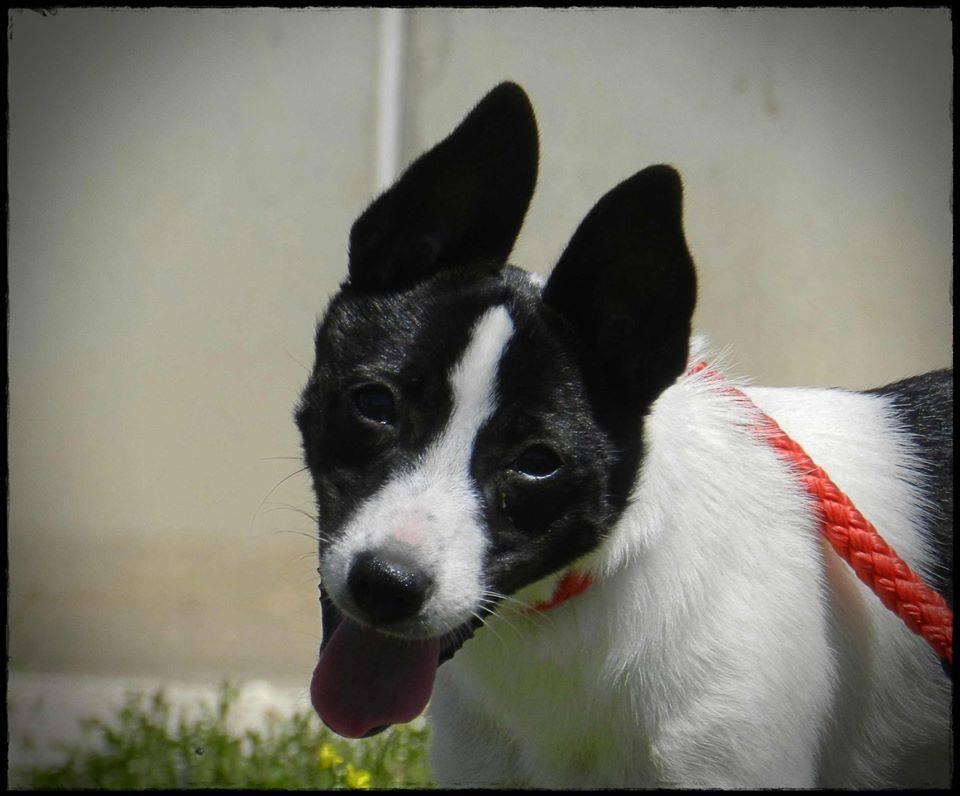 GELSOMINA, 6 mesi futuri 8 kg, adozione in zona