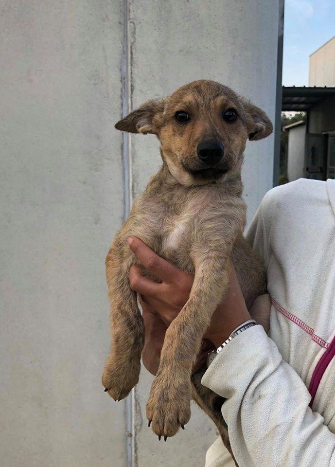 DUFFY, cucciolo 3 mesi taglia 15/18 kg