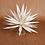 Thumbnail: White Agave Plant