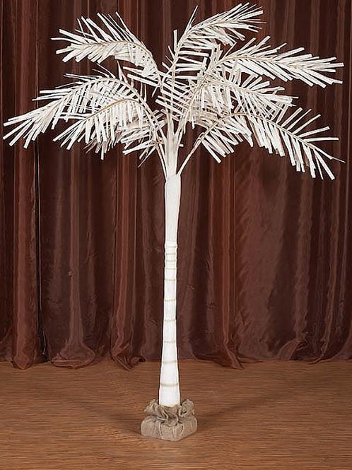 Carolina Palm 7ft.