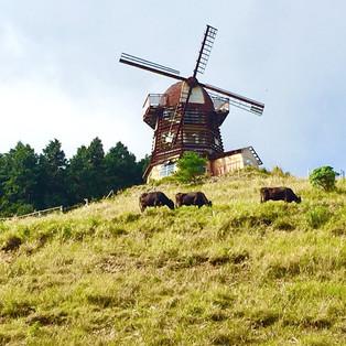 風車のある放牧地