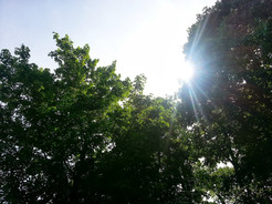 photo_indiana trees shine.jpg