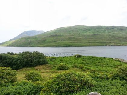 photo_ireland river.jpg