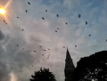 photo_ireland birds.jpg