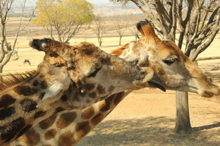 SOUTH AFRICA 2012