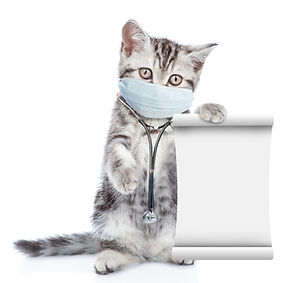 Kitten wearing like a doctor with medica