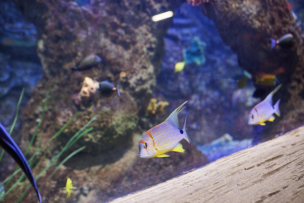 tropical fish at aquarium