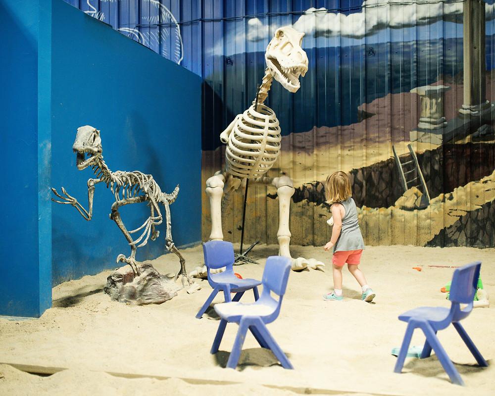 sand and Dino bones