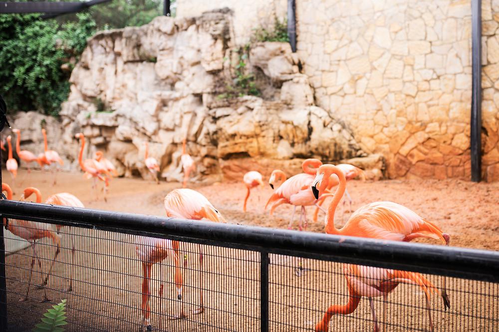 Flamingoes at entrance