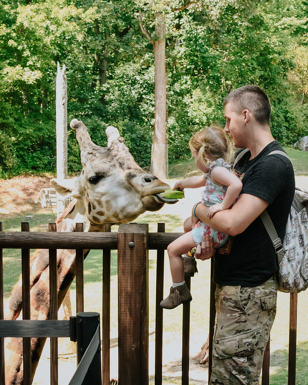 Clementine feeding giraffe