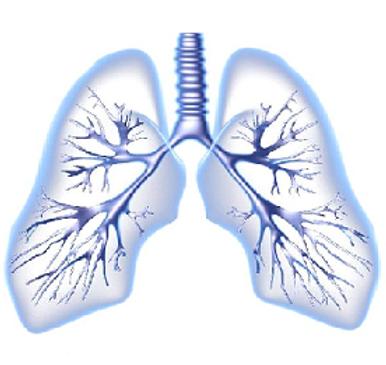 Lungs diagram