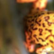 spots - Copy.jpg