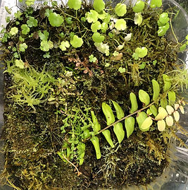 vivarium moss