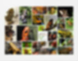 collage w log.jpg