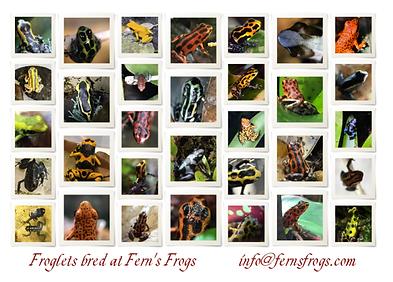 froglets bred .png