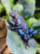 blueblue.jpg