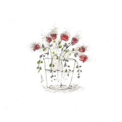fiori 19 maggio 10