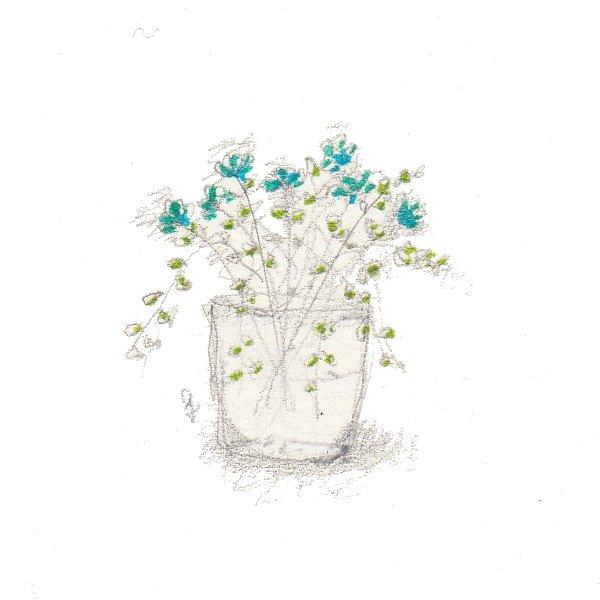 fiori 19 maggio 3