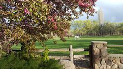 blossoms amongst training pasture