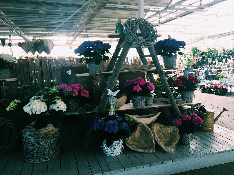 Hortensie Kränze Körbe Blumen
