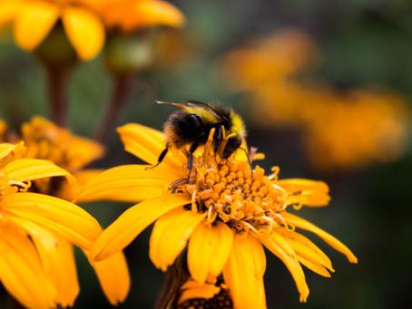 Bienen, die Gefährten des Gärtners