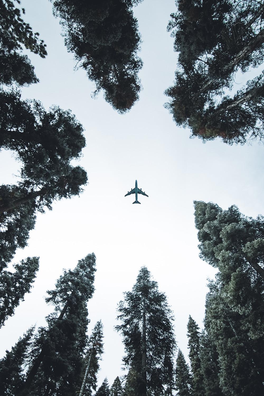 Airplane, aeroplane, trees, skyline, unknown destination, travel, journey, flying, skywards