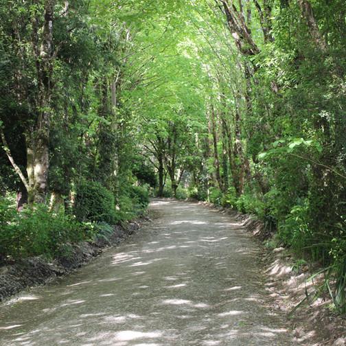 Trilha do Parque Philippi