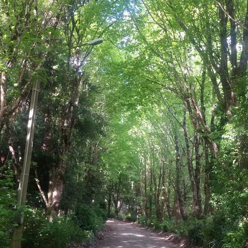 Parque Philippi