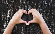 tree heart-unsplash.jpg