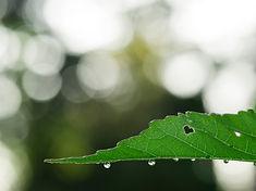 heart in leaf - unsplash.jpg
