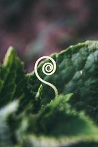 spiral sprout-unsplash.jpg