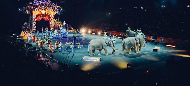 סיפור הפיל והיתד - אימון אישי