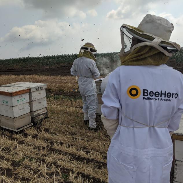 BeeHero BeeLab in Italy