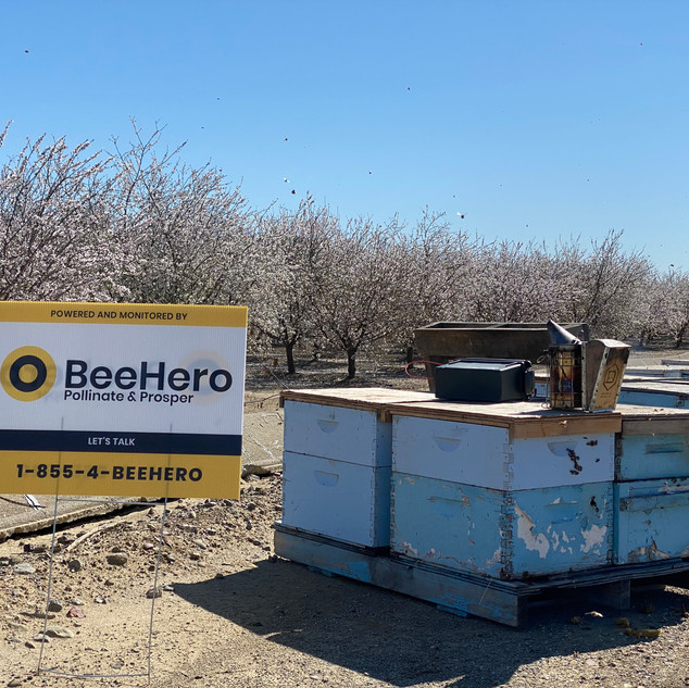 Pollinating with BeeHero