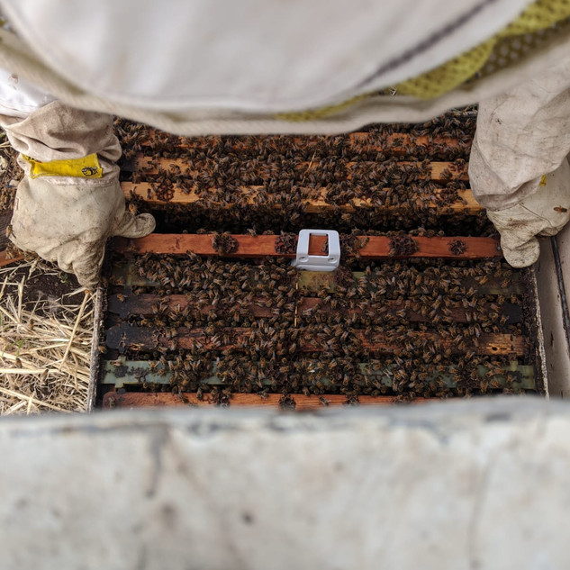 Sensor inside the hive