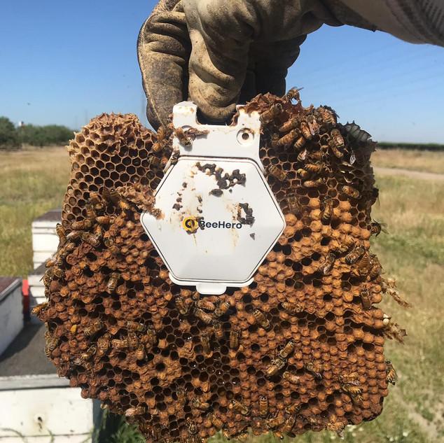 The bees love BeeHero