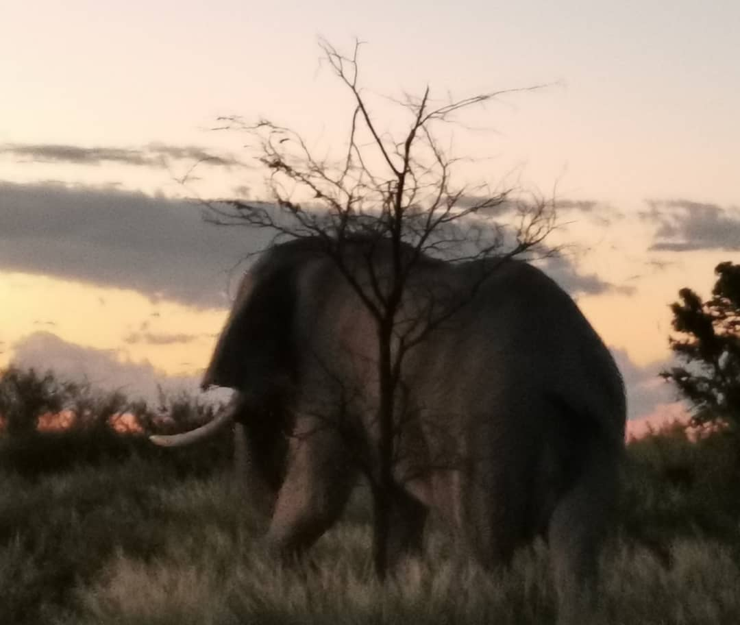 Elephant_Dawn.jpeg