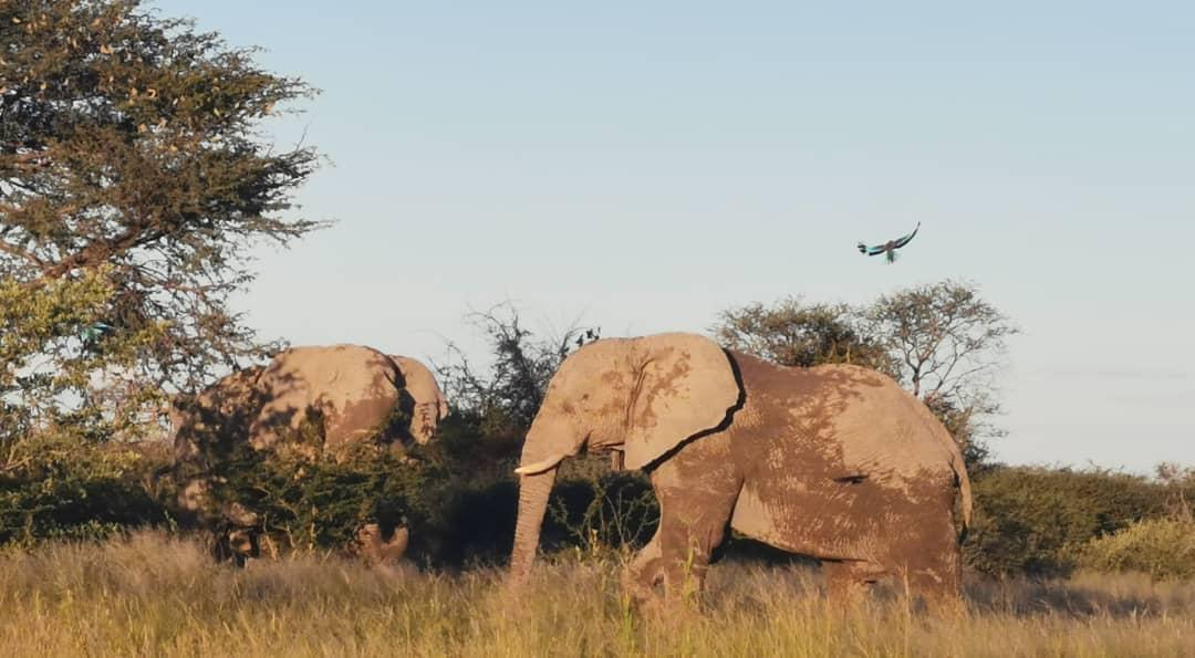 Elephant_x2.jpeg