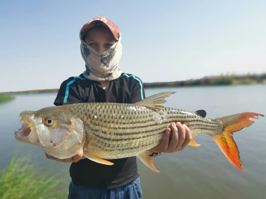 TigerFish1.jpeg