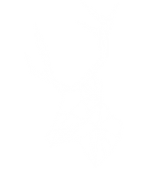 White Deer Picture.png
