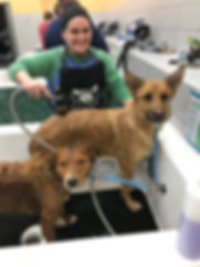 Twin Cities Self Serve Dog Wash