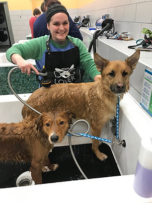 Twin Cities Self Serve Dog Wash