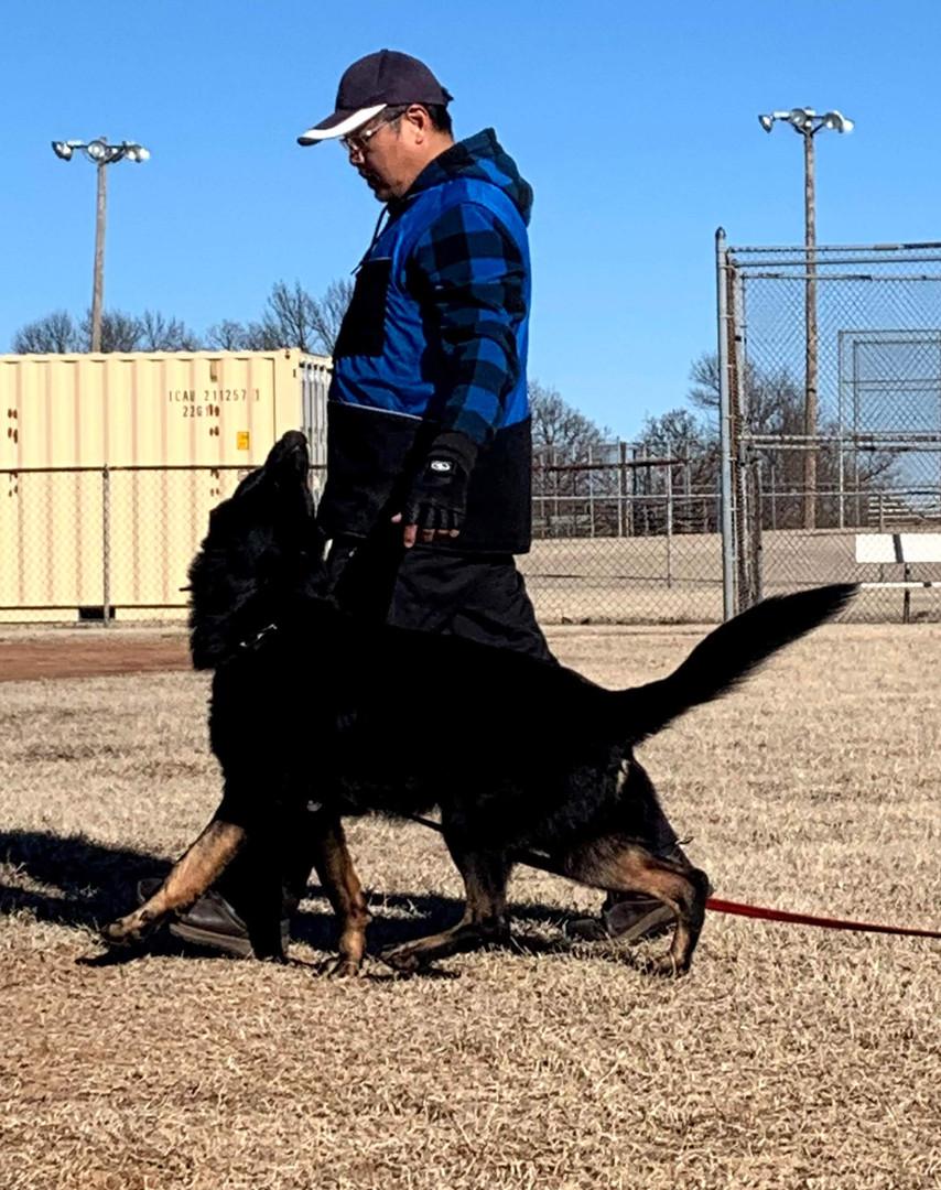 IGP/Schutzhund Trainer, Joseph Lin, & Armus Vom Boomerbucht BH, IPO1, IGP2(Earned at Regionals), IGP3 Czech, Working-line German Shepherd