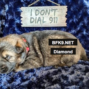 Brave and Faithful K9 Diamond
