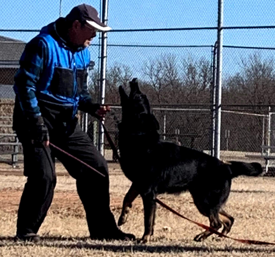 IGP/Schutzhund Trainer, Joseph LIn, & Armus Vom Boomerbucht BH, IPO1, IGP2 (Earned at Regionals), IGP3 Czech, Working-line German Shepherd